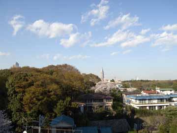 桜R0010568.jpg