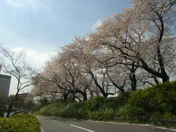 四谷の桜R0010595.jpg