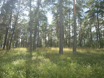 森の墓地R0011689.jpg