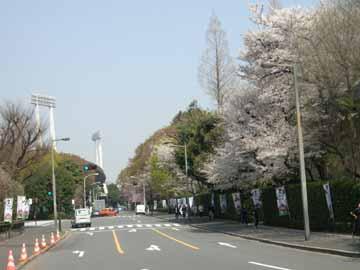 神宮外苑の桜R0010572.jpg