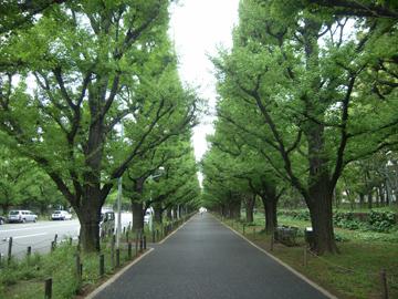 神宮外苑の新緑R0010642.jpg