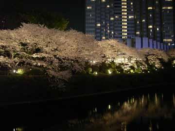 赤プリの桜R0010581.jpg