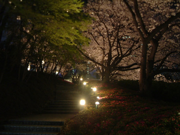 赤プリ桜DSCF0017.JPG