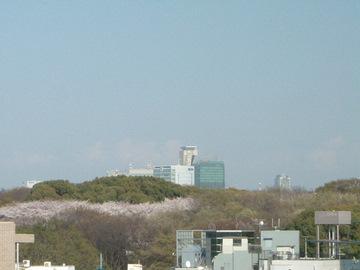 代々木公園の桜DSCF0001.jpg