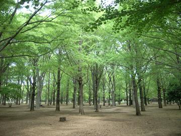 代々木公園R0010645.jpg