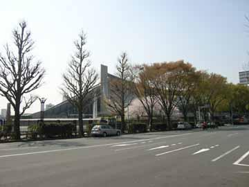 代々木体育館の桜R0010573.jpg